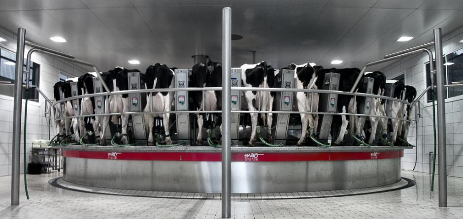 sala mungitura poderosa dairy